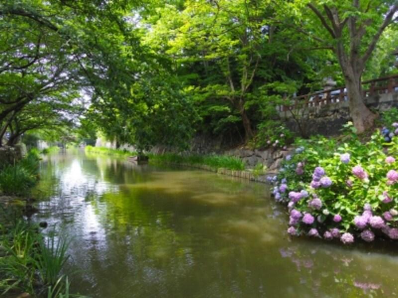 初夏の八幡堀