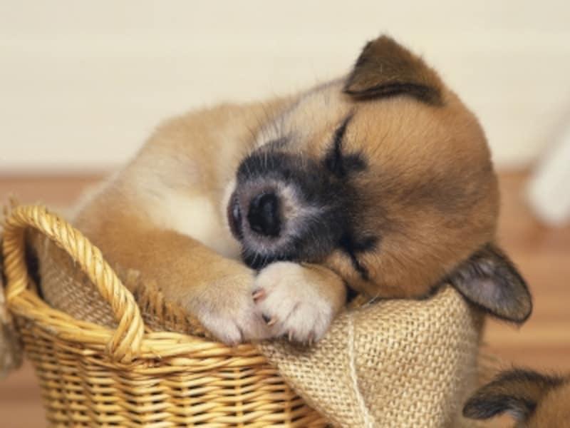 犬のベッドは適切な大きさが重要