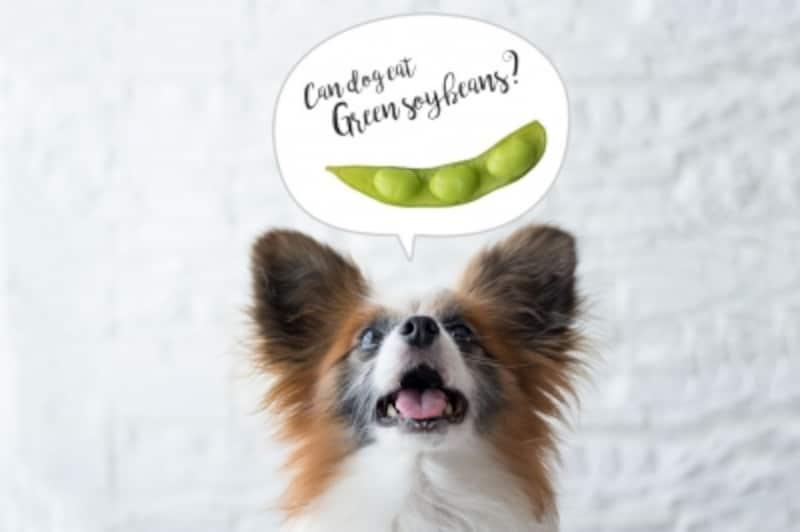 犬undefined枝豆undefined食べて良いundefined量undefined病気undefined薬undefined食べ合わせ