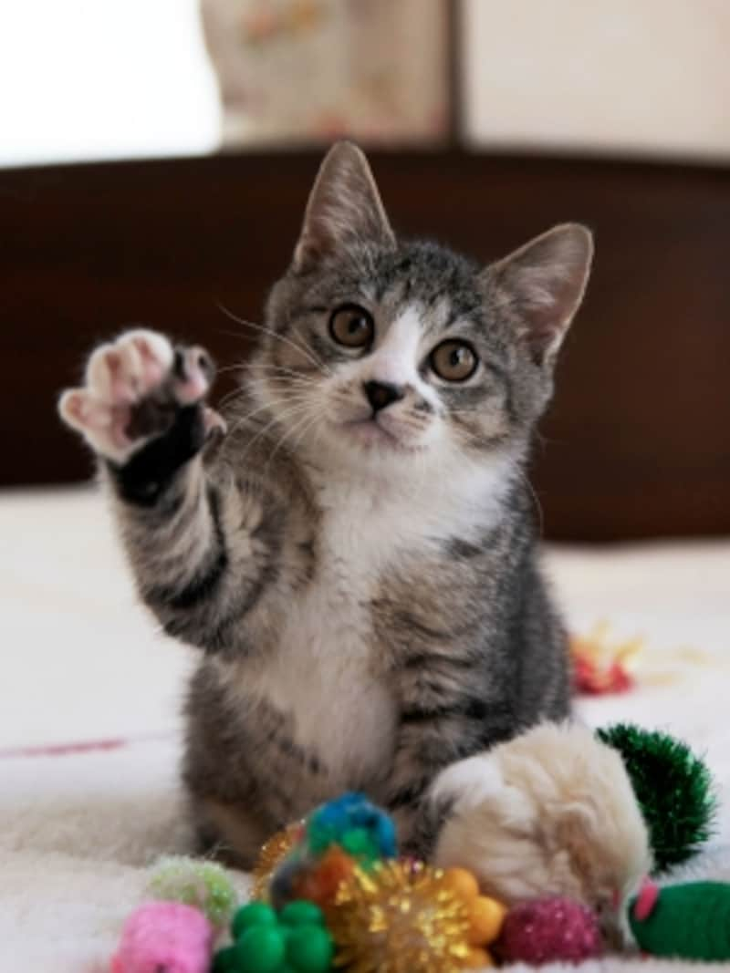 ちょいちょい。これは遊びモードの猫パンチ