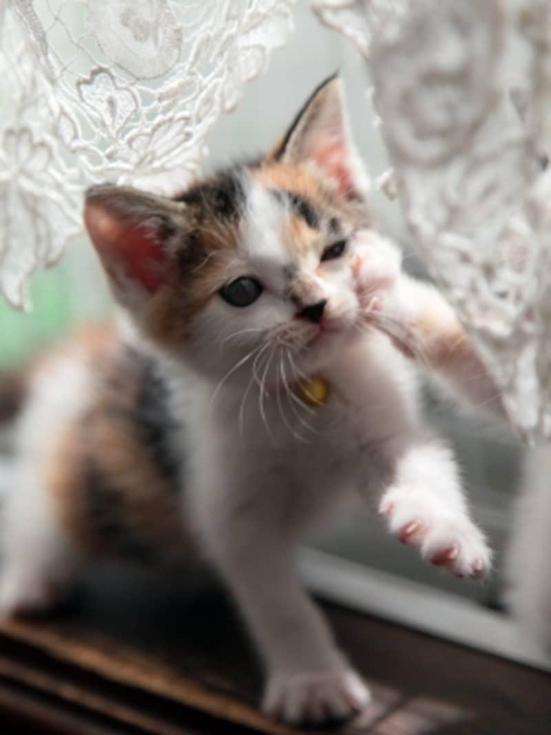 遊びモードの猫パンチ、子猫はこうして社会性を学びます