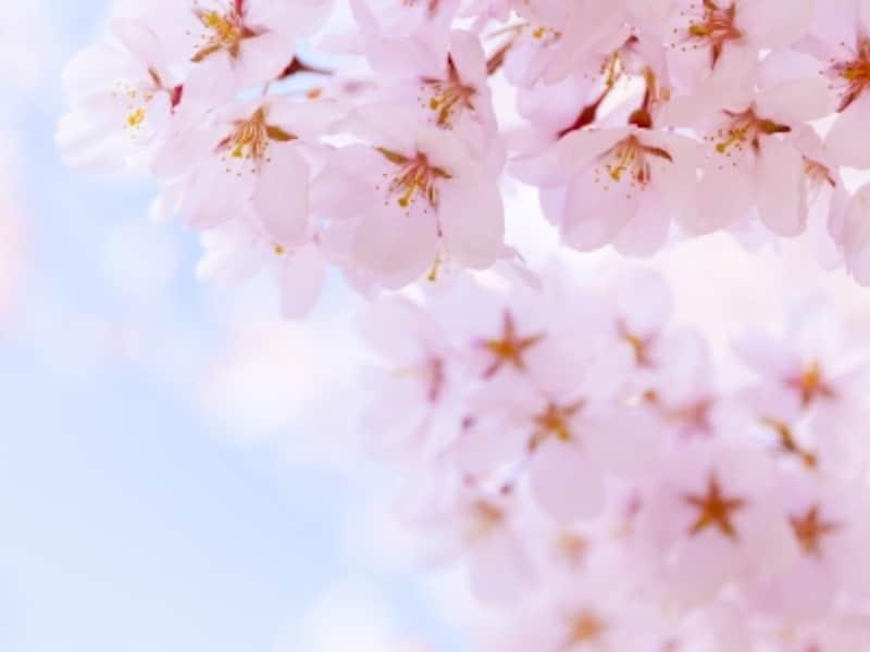 春の日差しに祝福される4月生まれ