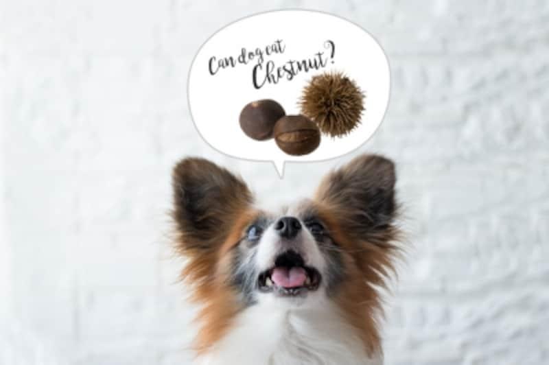 犬undefined栗undefined食べて良いundefined量undefined病気undefined薬undefined食べ合わせ