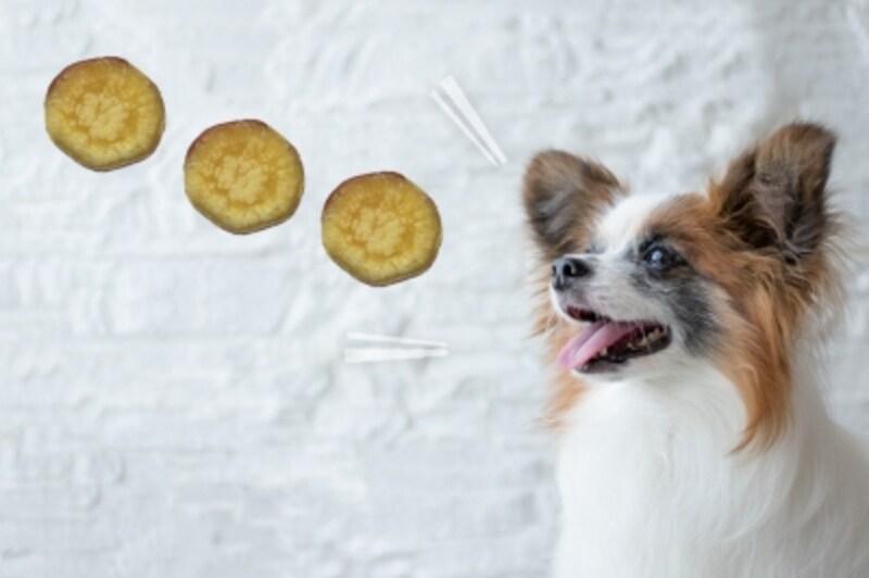 犬undefinedさつまいもundefined食べて良いundefined量undefined病気undefined薬undefined食べ合わせ