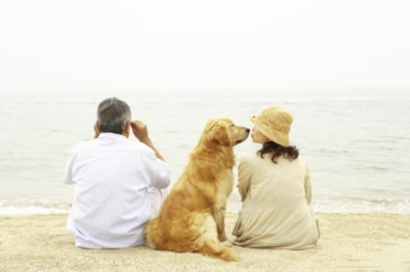犬の首輪は飼い主さんと犬の幸せを繋ぐもの