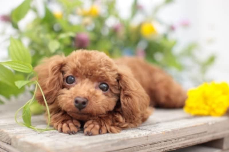 首輪とハーネス、どちらが愛犬に安心、安全を与える?