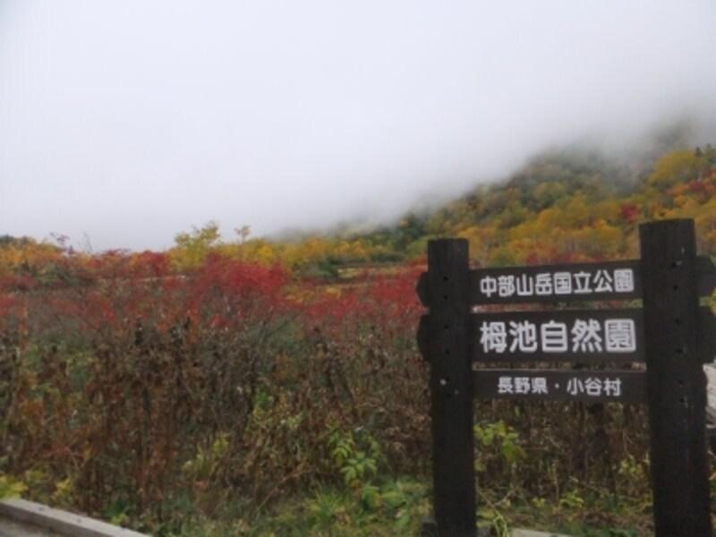 栂池自然園の紅葉・黄葉(2)