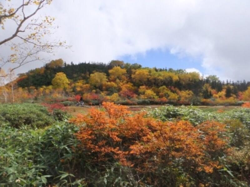 栂池自然園の紅葉・黄葉(5)