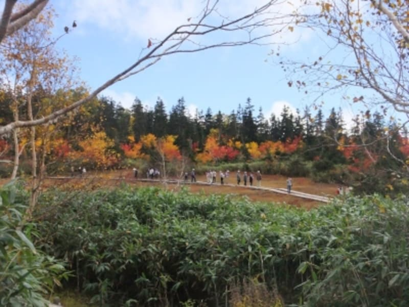 栂池自然園の紅葉・黄葉(1)