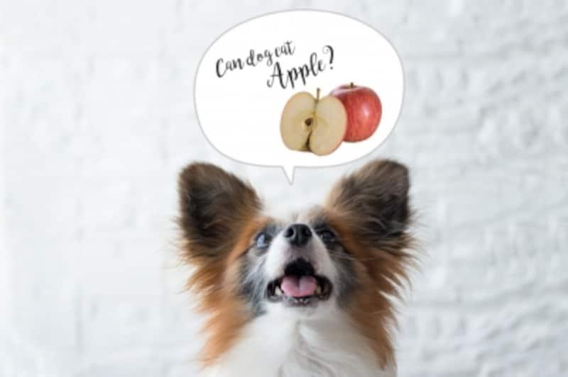 犬undefinedりんごundefined食べて良いundefined量undefined病気undefined薬undefined食べ合わせ