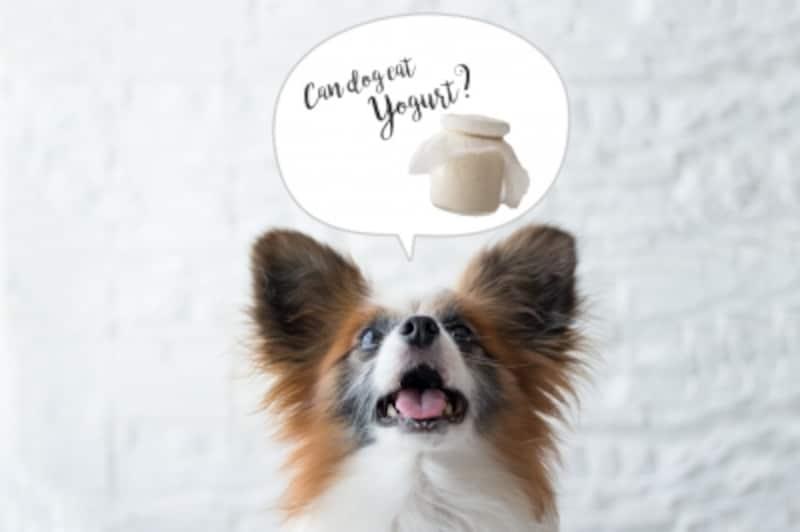 犬undefinedヨーグルトundefined食べて良いundefined量undefined病気undefined薬undefined食べ合わせ