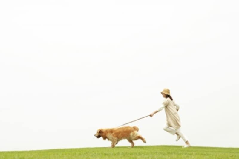 愛犬の首輪嫌いを克服して楽しいワンコライフを送ろう!