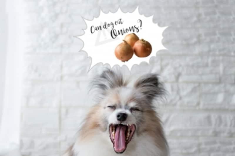 犬undefined玉ネギundefinedたまねぎundefined玉ねぎundefinedねぎundefined長ネギundefined長ねぎundefined万能ネギundefined与えてはいけないundefined食べてもいい