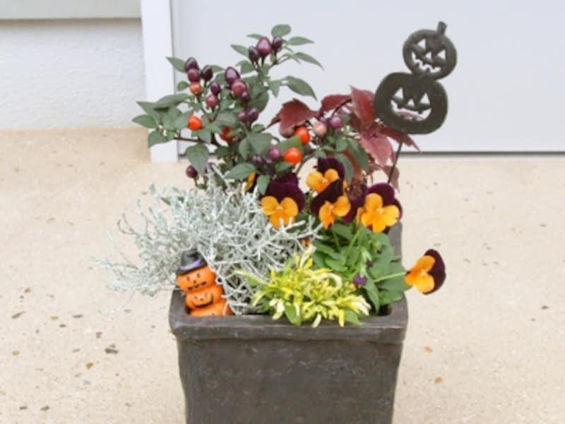 ハロウィン寄せ植え