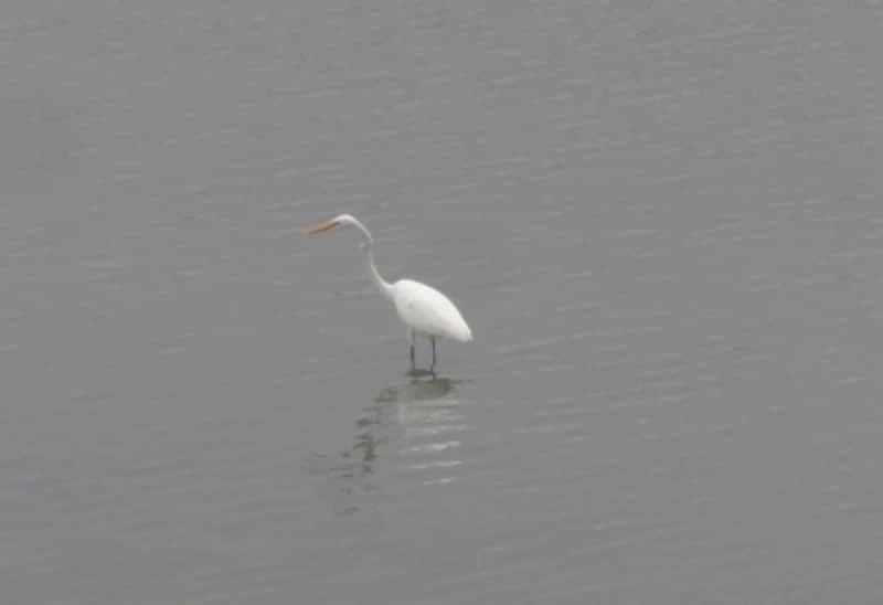 鳥を撮るのは意外に難しい