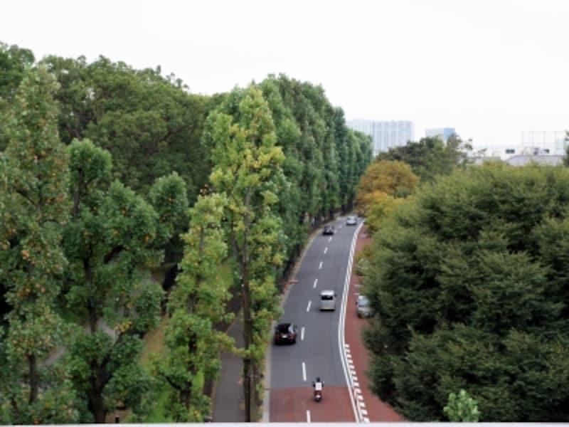 「ガーデンヒルズ四ツ谷迎賓の杜」7階住戸スカイルーフテラスから西方向を望む