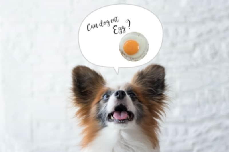 犬undefined卵undefined食べて良いundefined量undefined病気undefined薬undefined食べ合わせ