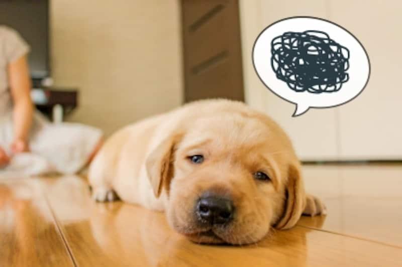 カーミングシグナルは犬のきもちを代弁したボディーランゲージ