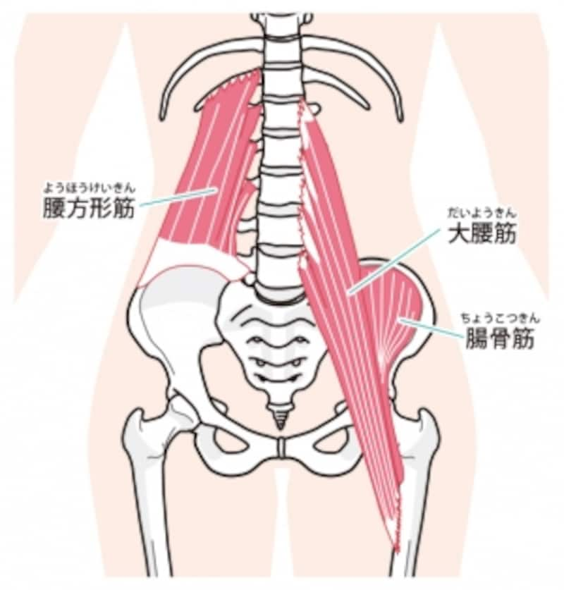 腸腰筋は2つの筋肉から構成されています。歩いたり、走ったりする基本的動作に作用する重要な筋肉