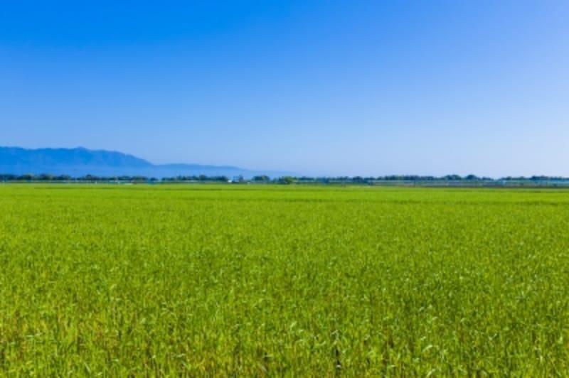 単に土地の価格が下落というだけでなく相続税にも大きな影響が。