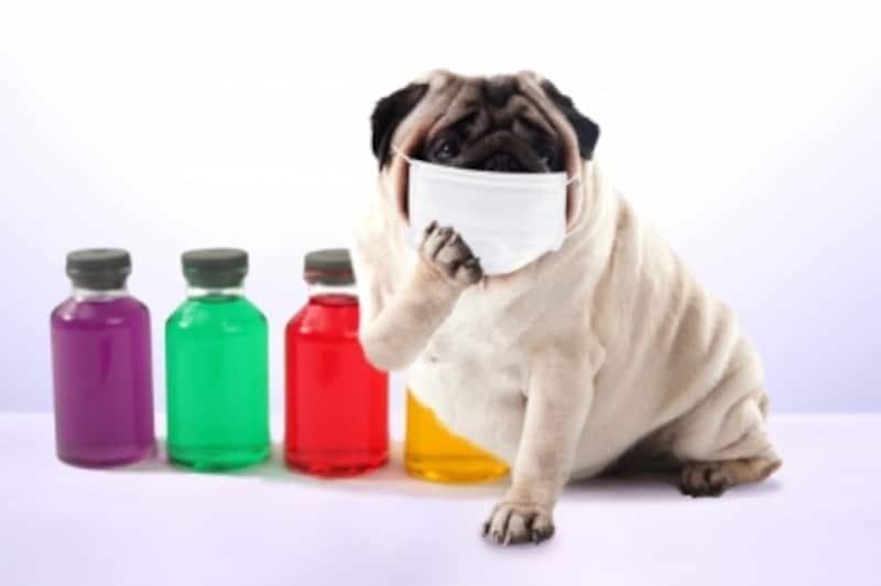犬のあくびが病気のサインとなるときとは
