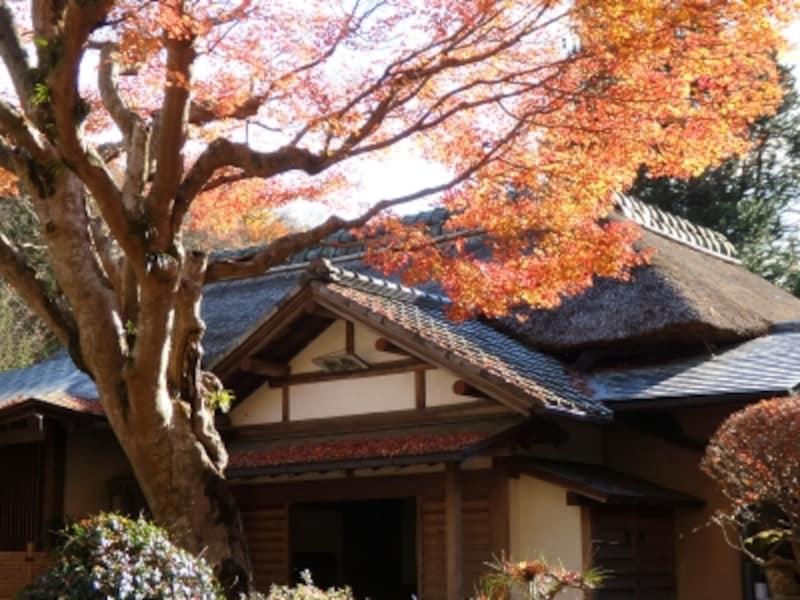 浄智寺の茅葺きのお堂にモミジが映えて