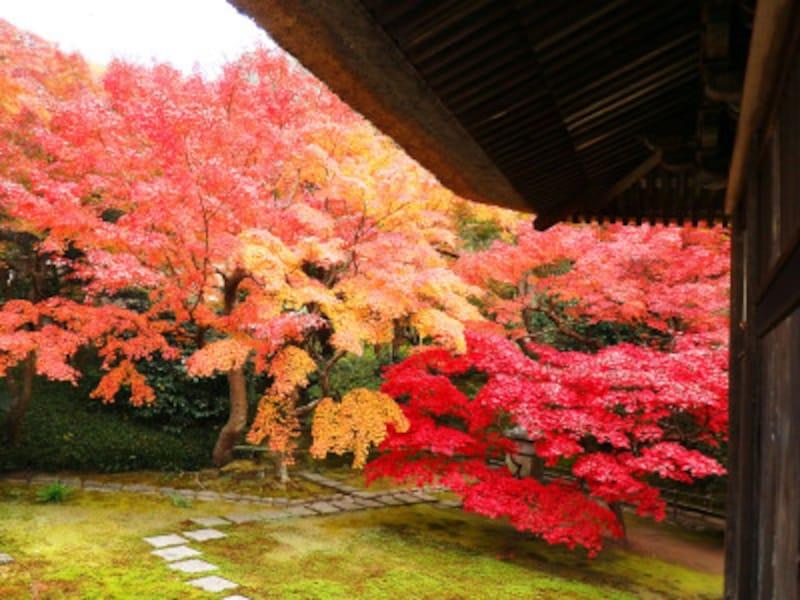 谷戸に包まれたお堂で静かに紅葉を愛でて