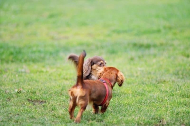 しっぽは犬にとって大切な部位だからこそ優しく扱ってあげて下さい。