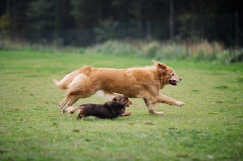 犬がしっぽを振る速さから読み取れる気持ちとは?