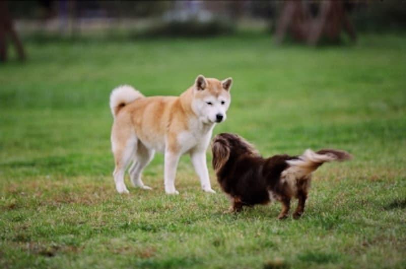 犬のしっぽ・右振りと左振りの違いとは?