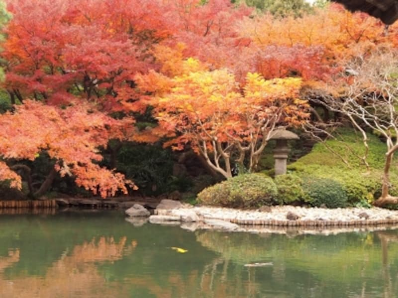 水面に映る紅葉もまた美しい