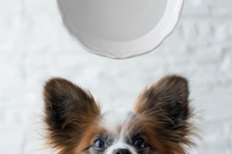 犬undefined水undefined飲んでいいundefined量undefined病気undefined薬