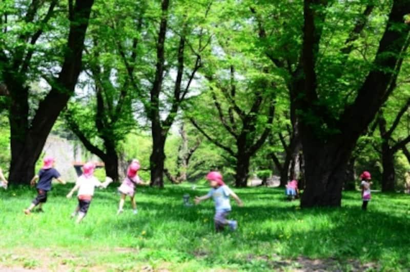森の中の幼稚園