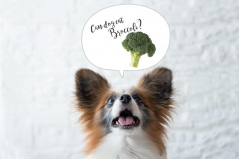 犬undefinedブロッコリーundefined食べて良いundefined量undefined病気undefined薬undefined食べ合わせ