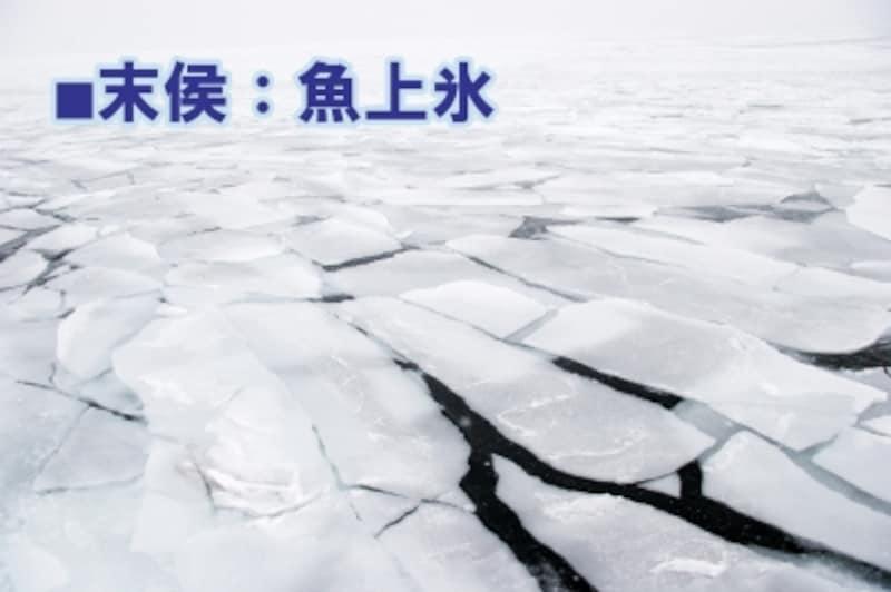 立春_末侯:魚上氷