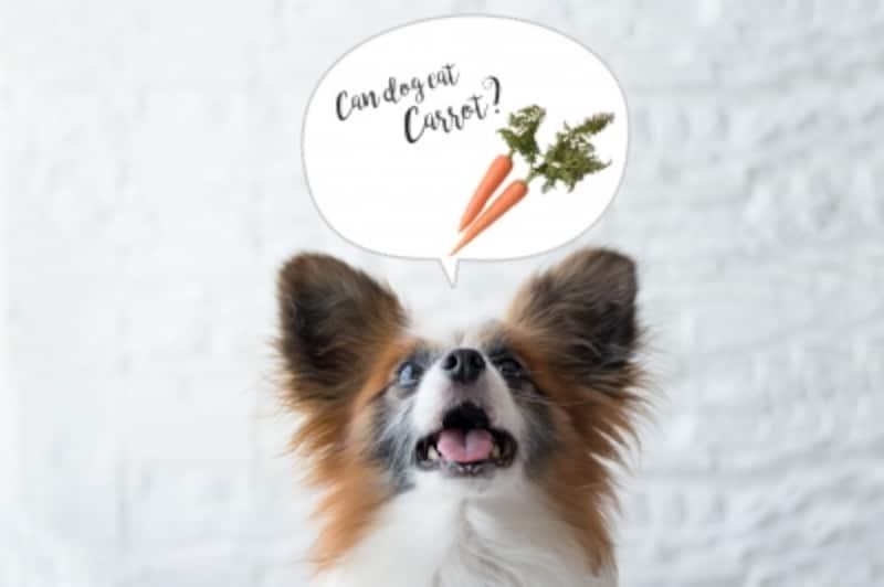 犬undefinedにんじんundefined食べて良いundefined量undefined病気undefined薬undefined食べ合わせ