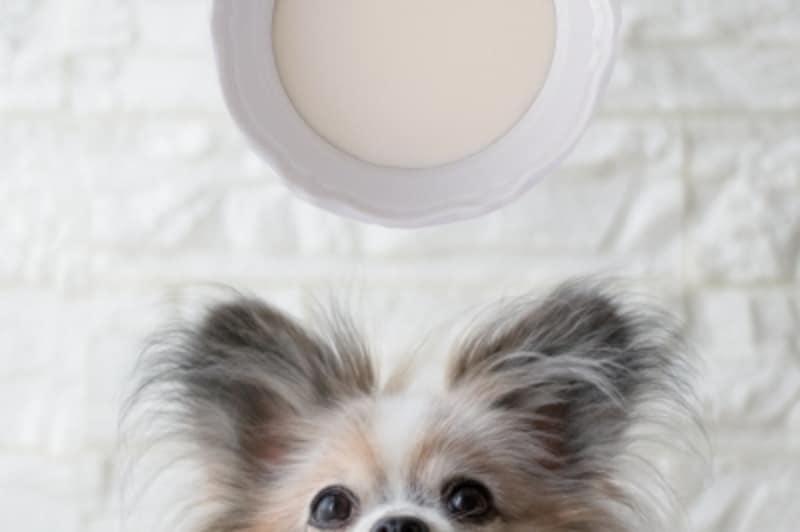 犬undefined牛乳undefinedあげて良いundefined量undefined病気undefined薬undefined食べ合わせ