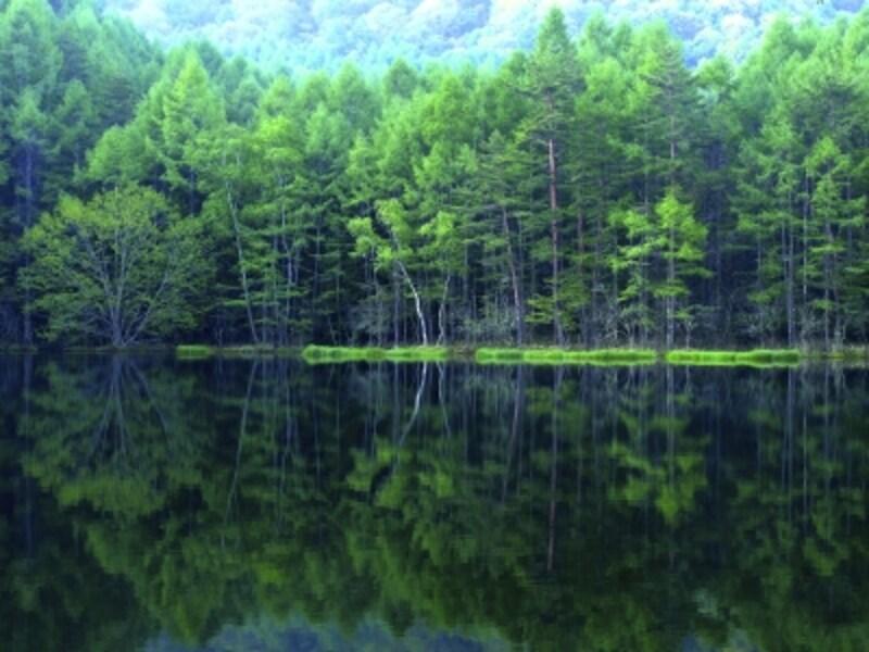 豊かな森,フォレストグリーン,自然の恵み