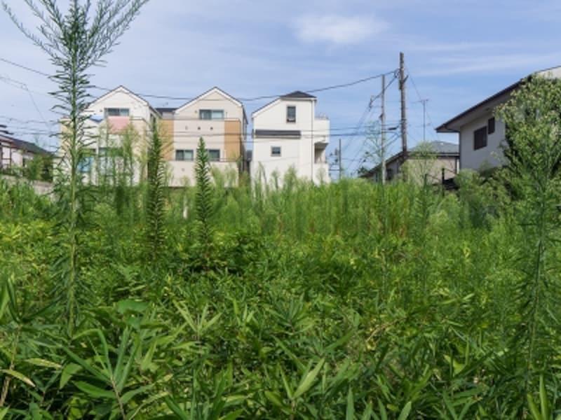 雑草が生い茂った空き地