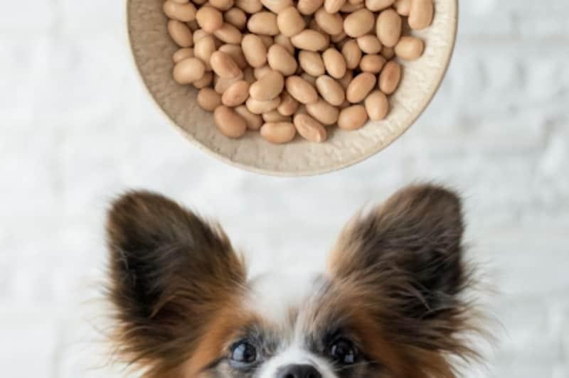 犬undefined大豆undefined食べて良いundefined量undefined病気undefined薬undefined食べ合わせ