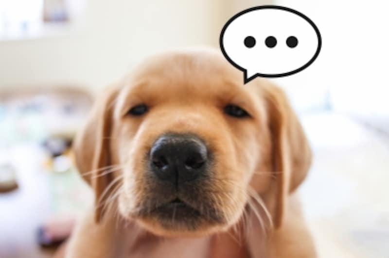 犬がおしっこをするときの気持ちに想いを馳せることも大切です