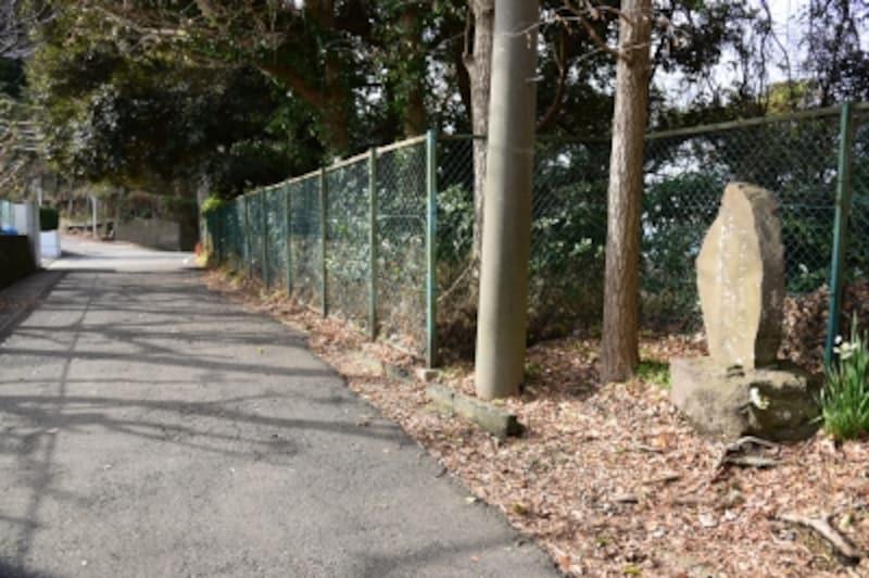 「かながわの景勝50選」の石碑の周囲は、木々に覆われています。石碑の前を通り、先に進みましょう