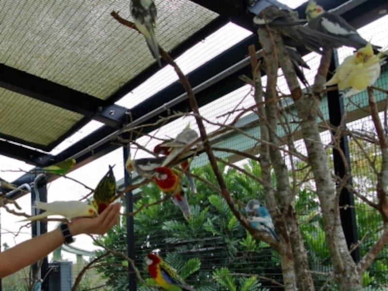 マイアミ動物園undefined小鳥