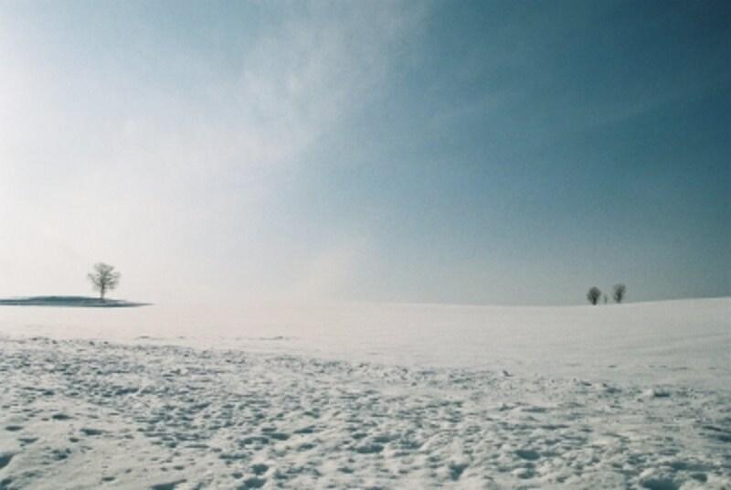 雪に覆われた丘と親子の木