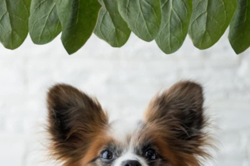 犬undefinedほうれん草undefined食べて良いundefined量undefined病気undefined薬undefined食べ合わせ