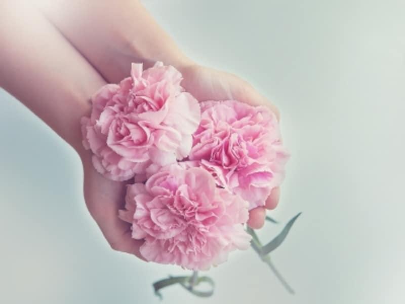 カーネーションの花言葉とは