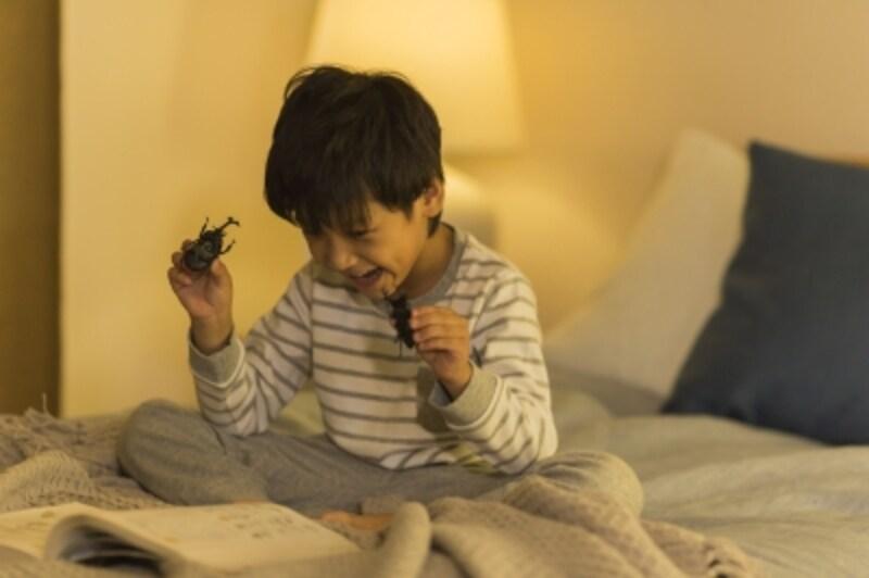 楽しそうに図鑑を読む男の子