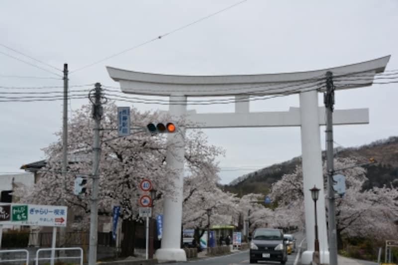 宝登山神社一の鳥居からの参道に整列する桜