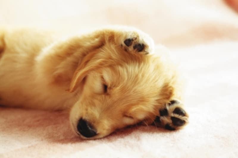 犬に名前をつけるときの5つのヒント 犬 All About