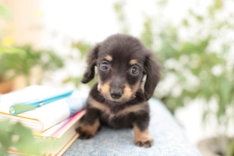 犬の名前を付けるときに知っておきたい5つのこと